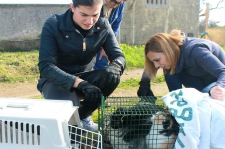 Campanha de esterilização visa diminuir número de gatos errantes pela cidade |Foto: Helga Nobre|