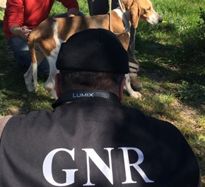 GNR apreende 55 cães de diversasraças