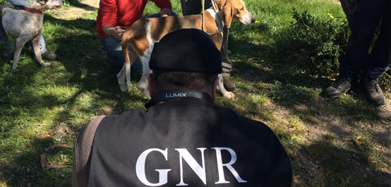 Duas pessoas foram constituídas arguidas por maus tratos e abandono de animais, no concelho de Grândola