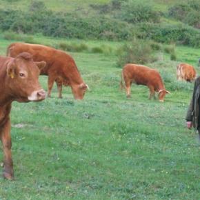 """Entrevista: """"Alguns dos nossos agricultores têm apresentado projectos inovadores comsucesso"""""""