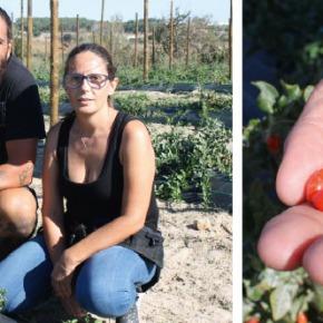 Empresas & Negócios: Monte das Bagas dá frutos em SantoAndré