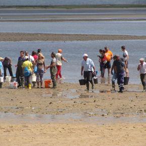 Mais de 600 mariscadores abordados em ação de sensibilização contra a poluição doSado