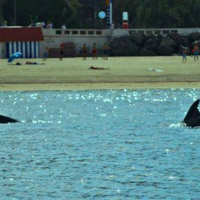 Golfinhos são os novos 'inquilinos' na baía deSines