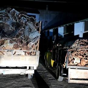 Quatro pessoas detidas pelo furto de mais de uma tonelada de cortiça emGrândola