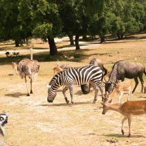 Badoca Safari Park reabre em junho mas pede ajuda urgente doGoverno