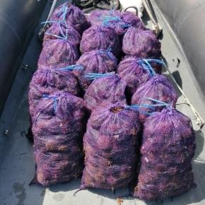 Polícia Marítima de Sines apreende 166kg de ouriços do mar na CostaVicentina
